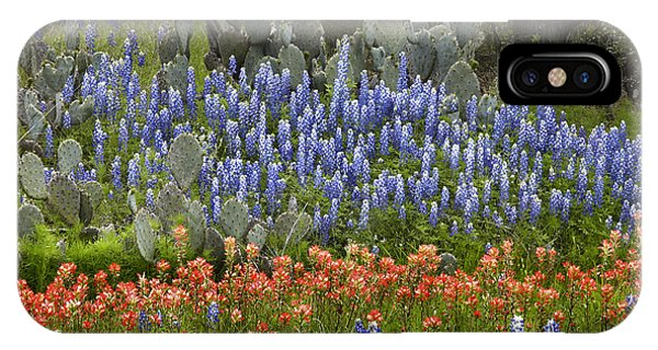 Bluebonnets Paintbrush And Prickly Pear IPhone Case