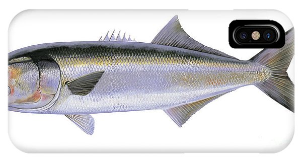 Reel iPhone Case - Bluefish by Carey Chen
