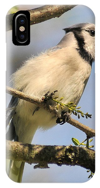 Bluejay 310 IPhone Case