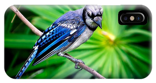 Thoughtful Bluejay IPhone Case