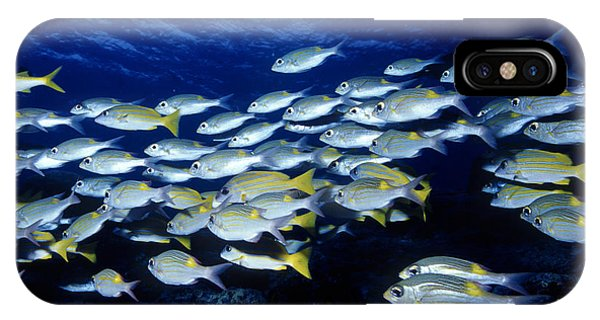Bluelined Snappers And Yellowspot Emperors IPhone Case