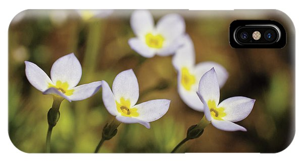 Bluet Flowers, Houstonia Caerulea IPhone Case