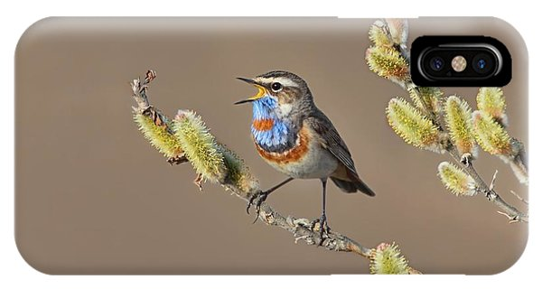 Bluethroat IPhone Case