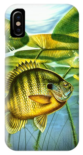 Lure iPhone Case - Blugill And Lilypads by JQ Licensing