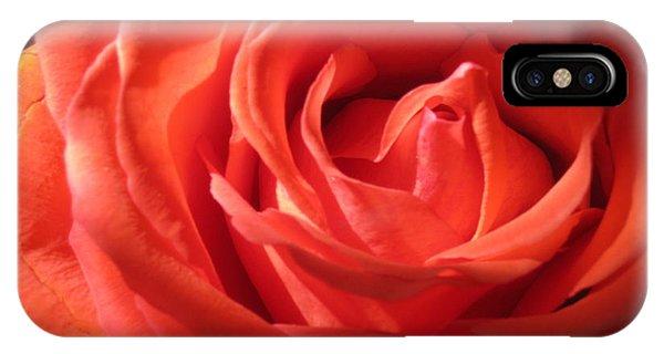Blushing Orange Rose 1 IPhone Case