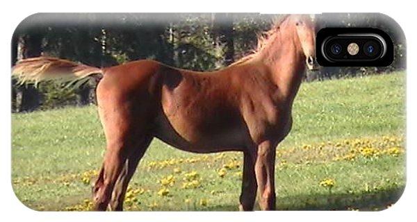 Blythewood Farms Horse IPhone Case