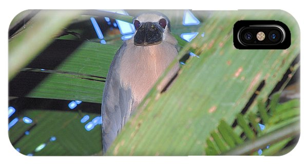 Boat Billed Heron IPhone Case