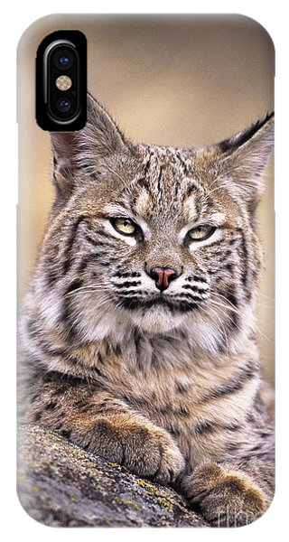 IPhone Case featuring the photograph Bobcat Cub Portrait Montana Wildlife by Dave Welling
