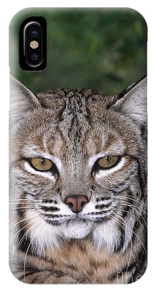 IPhone Case featuring the photograph Bobcat Portrait Wildlife Rescue by Dave Welling