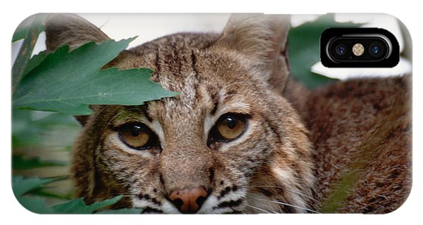 Bobcat With Maple Leaves IPhone Case