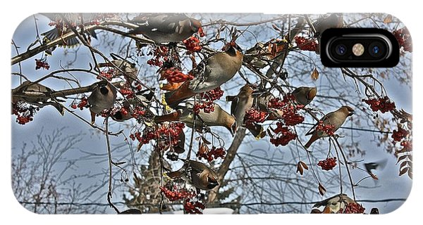 Bohemian Waxwing Feast IPhone Case