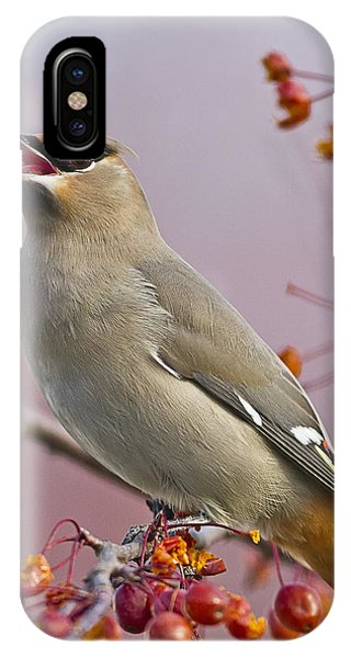 Bohemian Waxwing With Fruit IPhone Case