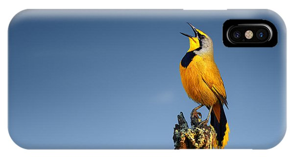 Bird iPhone Case - Bokmakierie Bird Calling by Johan Swanepoel