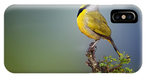 Bird iPhone Case - Bokmakierie Bird - Telophorus Zeylonus by Johan Swanepoel