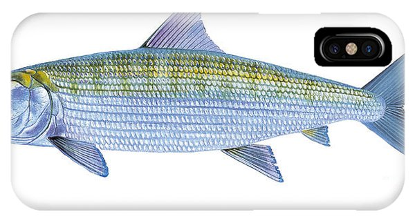 Trout iPhone Case - Bonefish by Carey Chen