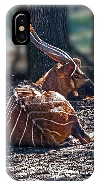 Bongo IPhone Case