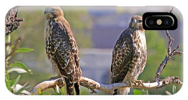 Red Tail Hawk iPhone Case - Bookends by Donna Kennedy