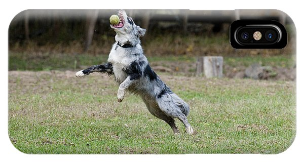 Border Collie Catching A Ball IPhone Case