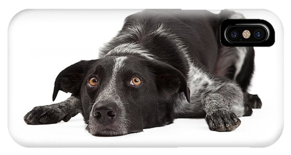 Border Collie Laying Head Down IPhone Case