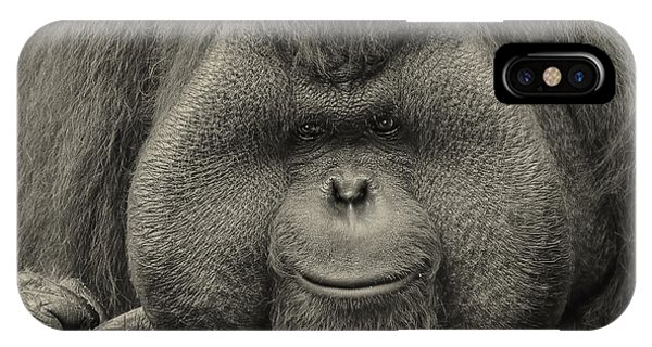 Bornean Orangutan II IPhone Case