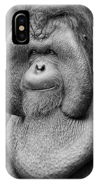 Bornean Orangutan IIi IPhone Case