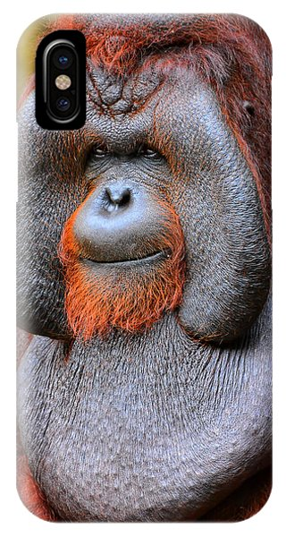 Bornean Orangutan Iv IPhone Case