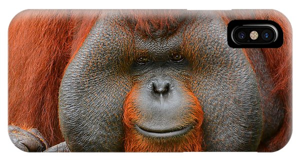 Bornean Orangutan IPhone Case
