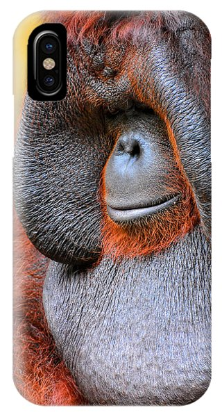 Bornean Orangutan Vi IPhone Case