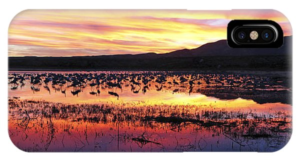 Bosque Del Apache IPhone Case