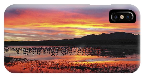 Bosque Sunset I IPhone Case