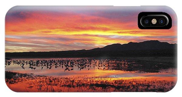 Bosque Sunset I IPhone Case