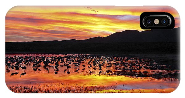 Bosque Sunset II IPhone Case