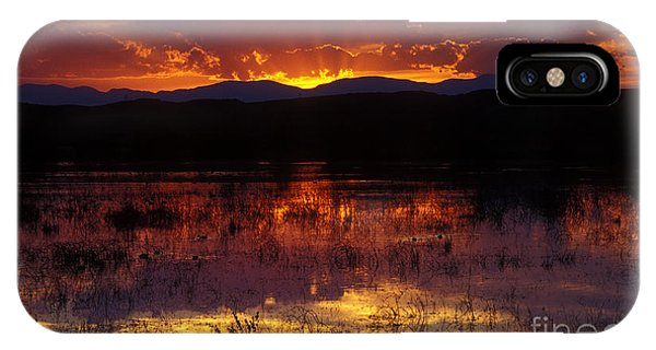 Bosque Sunset - Orange IPhone Case