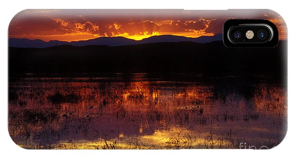 Bosque Sunset - Orange IPhone Case