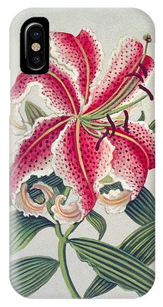 Stamen iPhone Case - Botanical Lily by Lillian Delevoryas