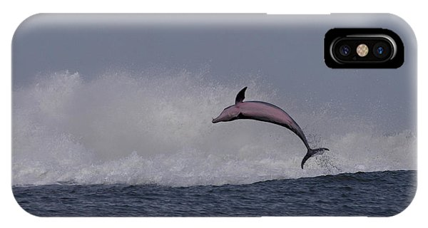 Bottlenose Dolphin Photo IPhone Case