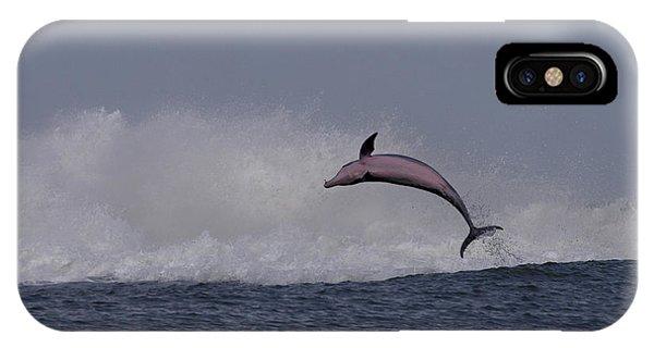 Bottlenose Dolphin Photo IPhone Case
