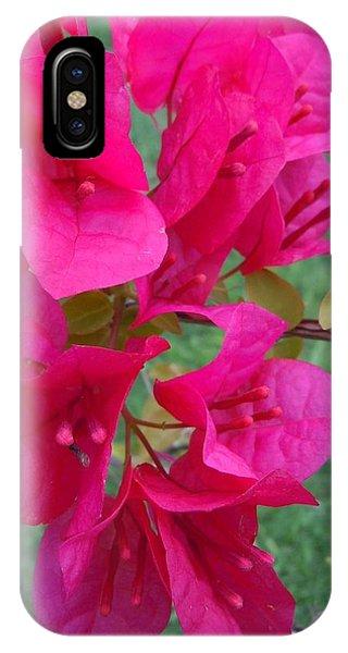 Bougainvillea Dream #2 IPhone Case