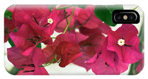 Cultivar iPhone Case - Bougainvillea X Buttiana 'barbara Karst' by Adrian Thomas