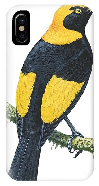 Audubon iPhone X Case - Bowerbird  by Anonymous