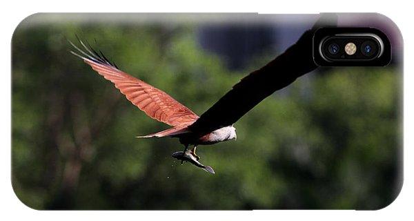 Brahminy Kite With Catch  IPhone Case