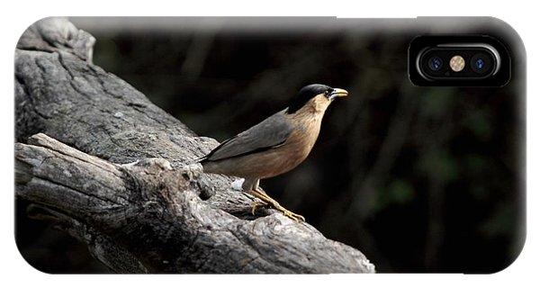 Brahminy Starling IPhone Case