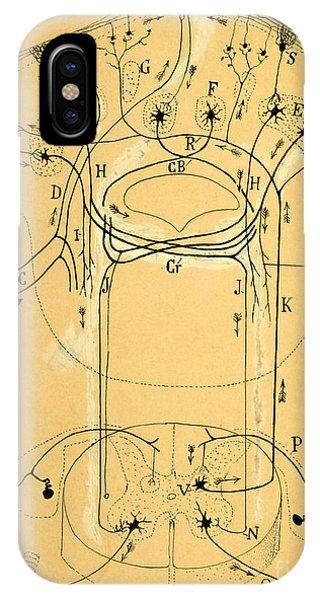 Nerves iPhone Case - Brain Vestibular Sensor Connections By Cajal 1899 by Science Source