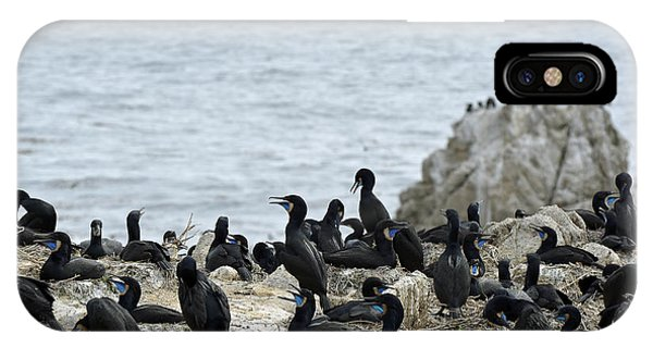 Brandt's Cormorant Colony At Point Lobos State Natural Reserve IPhone Case