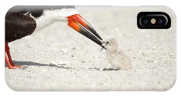 Black Skimmer And Chick. IPhone Case