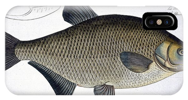 Ichthyology iPhone Case - Bream by Andreas Ludwig Kruger
