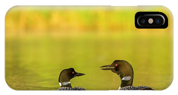 Loon iPhone Case - Breeding Pair Of Common Loons by Chuck Haney