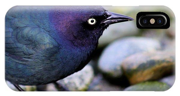 Brewers Blackbird IPhone Case