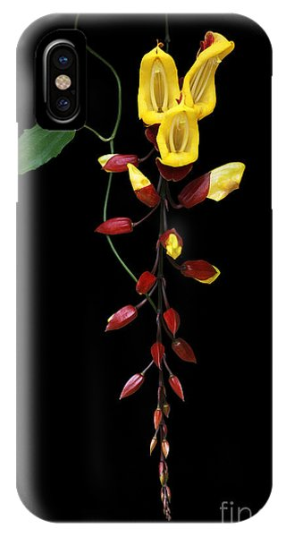 Brick And Butter Vine IPhone Case