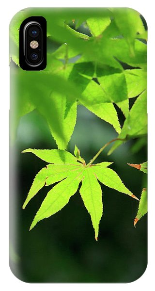 Bright Green Japanese Maple Trees Phone Case by Paul Dymond